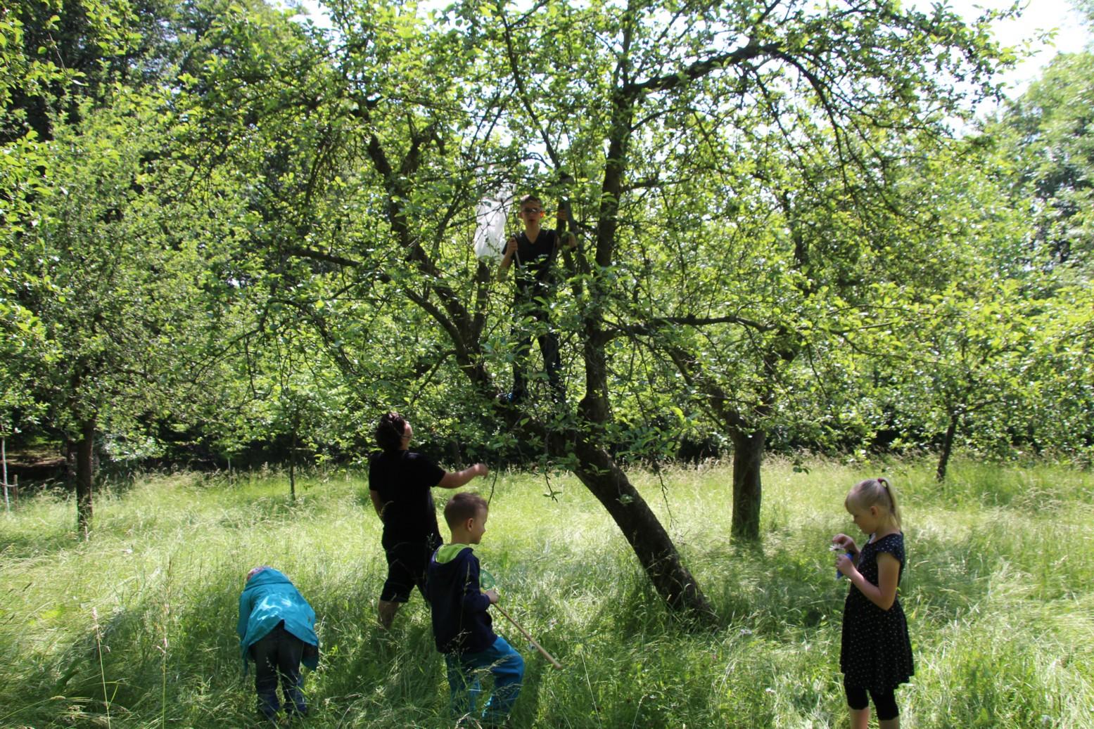 Tag der Artenvielfalt – heimische Pflanzen- und Tierarten bestimmen