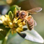 Bienenhaltung an unserer Schule